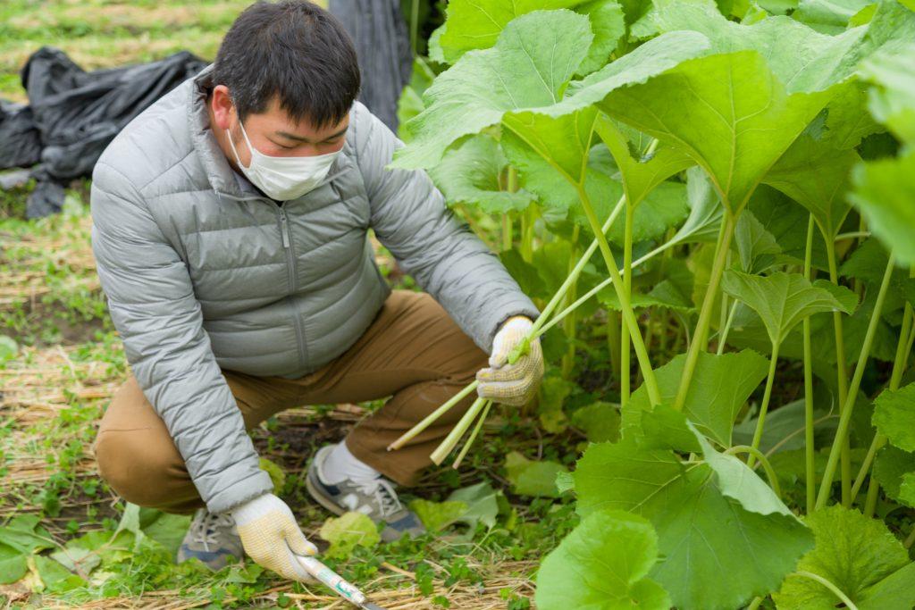 春野菜の苦味成分「植物性アルカロイド」を深堀り!